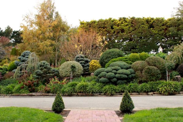 garden1-71C1FA46D-2B2B-2687-9C7A-279C57CE51FE.jpg