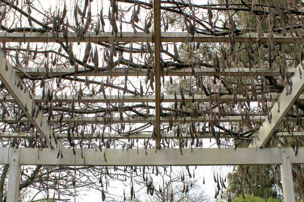 wisteria07-5BB7DE6A5-34F6-087F-7EB1-553814CD02FC.jpg
